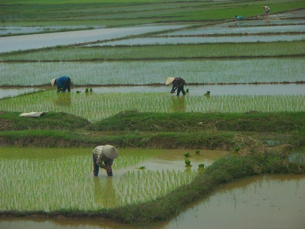 Vietnam (July 2004)